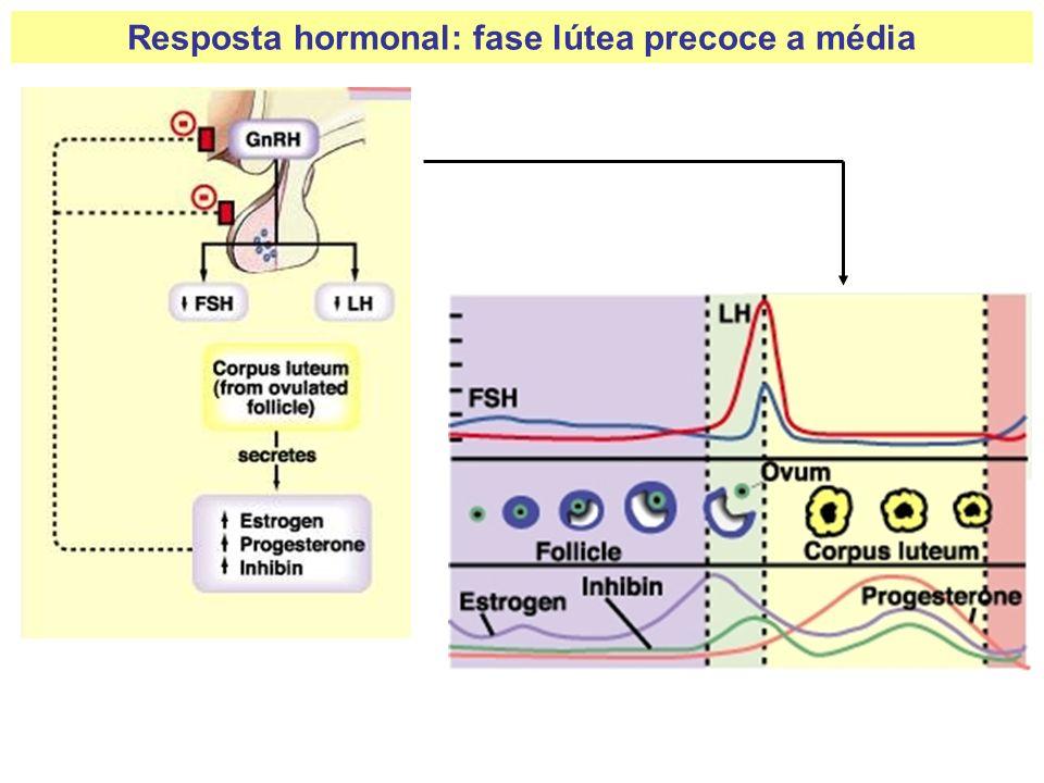 Resposta hormonal: fase lútea precoce a média