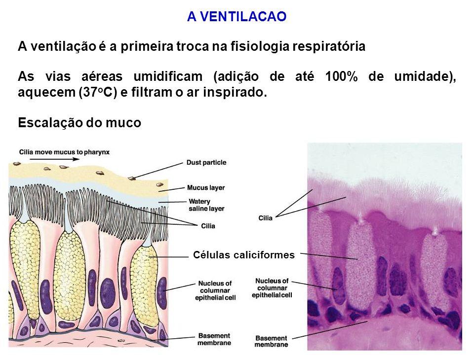 A VENTILACAO A ventilação é a primeira troca na fisiologia respiratória Células caliciformes As vias aéreas umidificam (adição de até 100% de umidade)