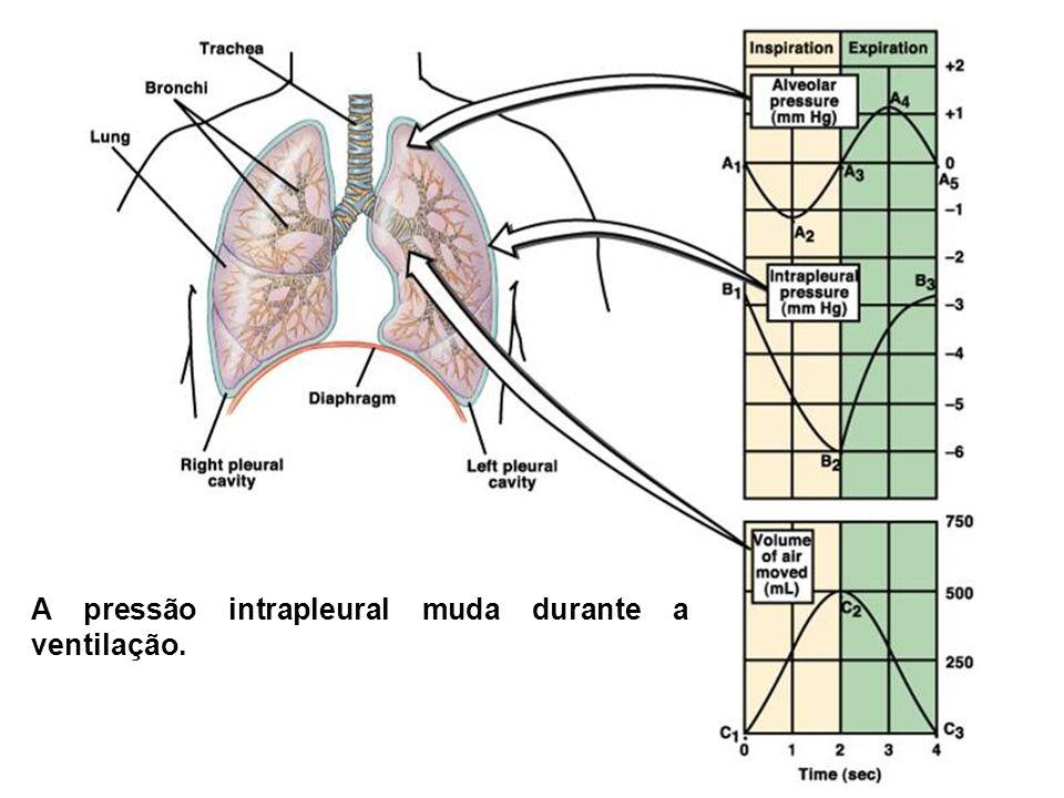A pressão intrapleural muda durante a ventilação.