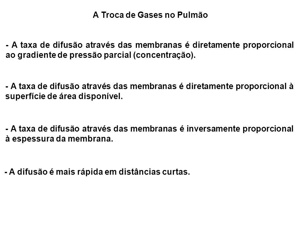 A Troca de Gases no Pulmão - A taxa de difusão através das membranas é diretamente proporcional ao gradiente de pressão parcial (concentração). - A ta