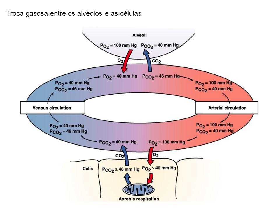Troca gasosa entre os alvéolos e as células