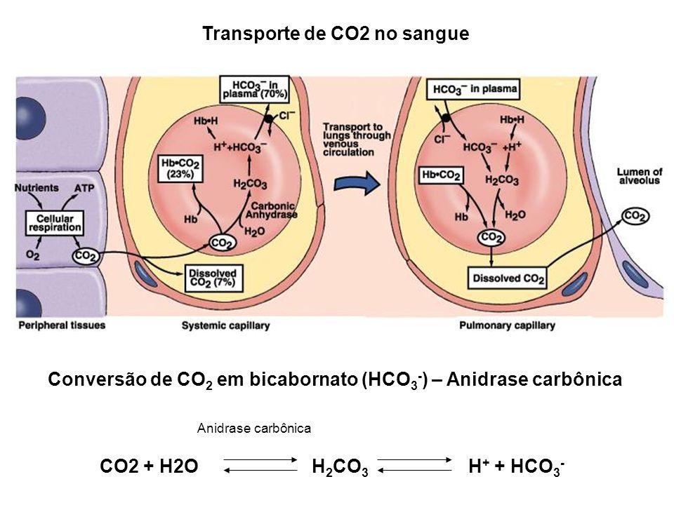 Transporte de CO2 no sangue Conversão de CO 2 em bicabornato (HCO 3 - ) – Anidrase carbônica CO2 + H2OH 2 CO 3 H + + HCO 3 - Anidrase carbônica
