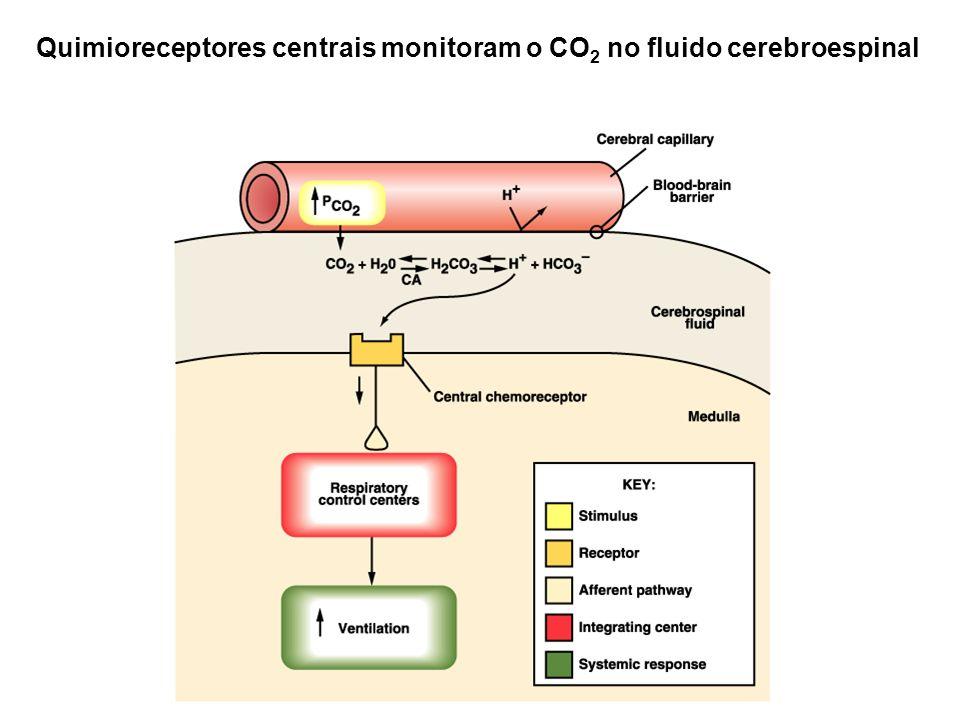 Quimioreceptores centrais monitoram o CO 2 no fluido cerebroespinal