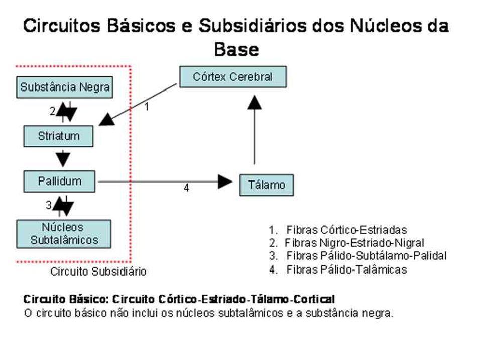 REFERÊNCIAS BIBLIOGRAFIAS BEAR, Mark.et. al. Neurociências: Desvendando o Sistema Nervoso.