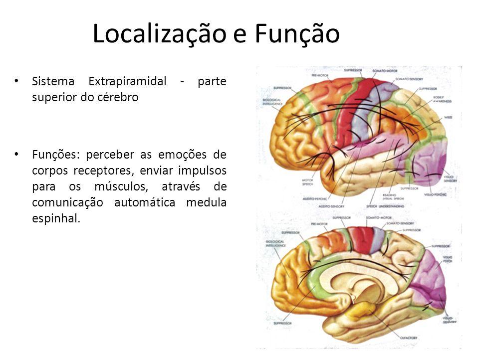 Localização e Função Sistema Extrapiramidal - parte superior do cérebro Funções: perceber as emoções de corpos receptores, enviar impulsos para os músculos, através de comunicação automática medula espinhal.