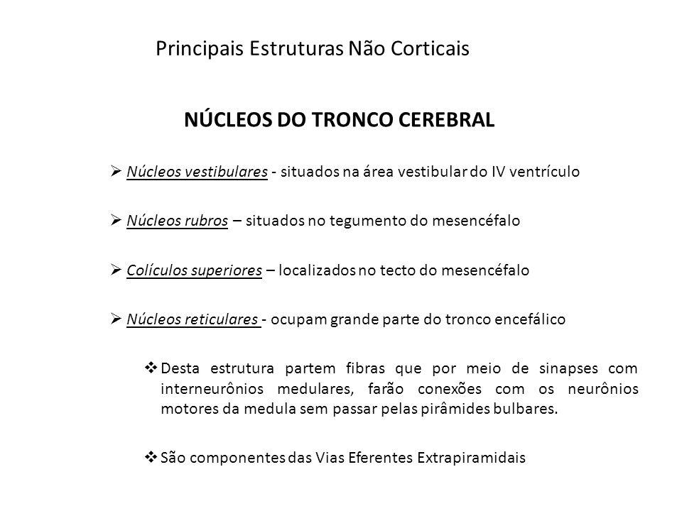 Principais Estruturas Não Corticais NÚCLEOS DO TRONCO CEREBRAL Núcleos vestibulares - situados na área vestibular do IV ventrículo Núcleos rubros – si