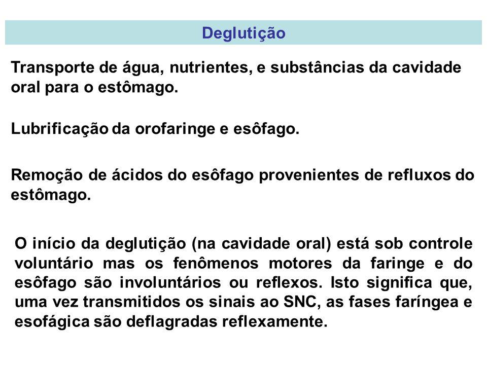 Deglutição Transporte de água, nutrientes, e substâncias da cavidade oral para o estômago.