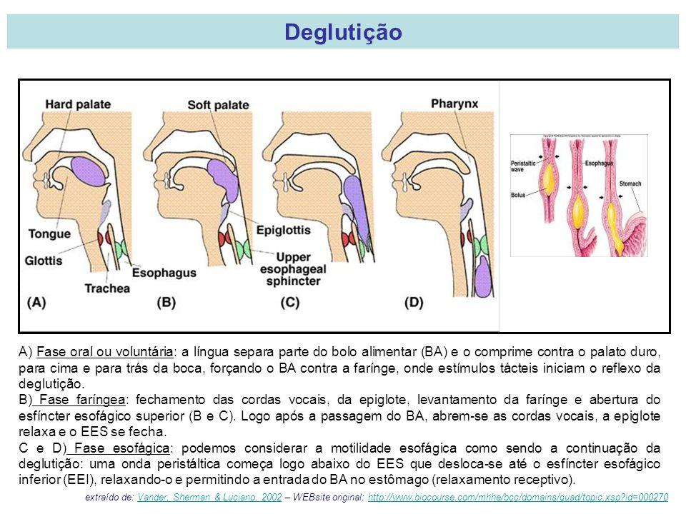 A) Fase oral ou voluntária: a língua separa parte do bolo alimentar (BA) e o comprime contra o palato duro, para cima e para trás da boca, forçando o BA contra a farínge, onde estímulos tácteis iniciam o reflexo da deglutição.