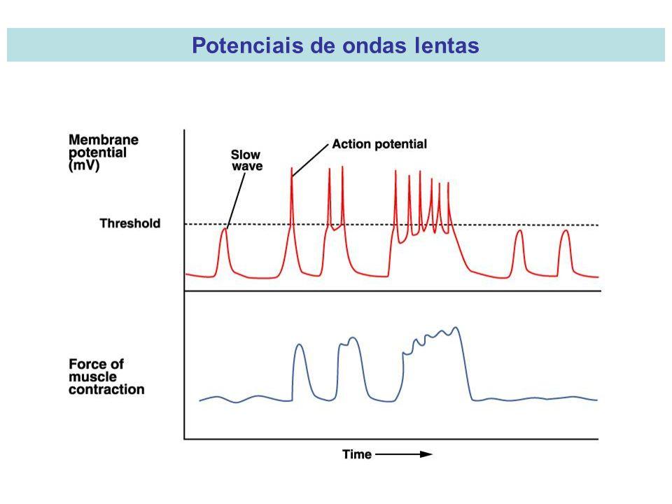 Potenciais de ondas lentas