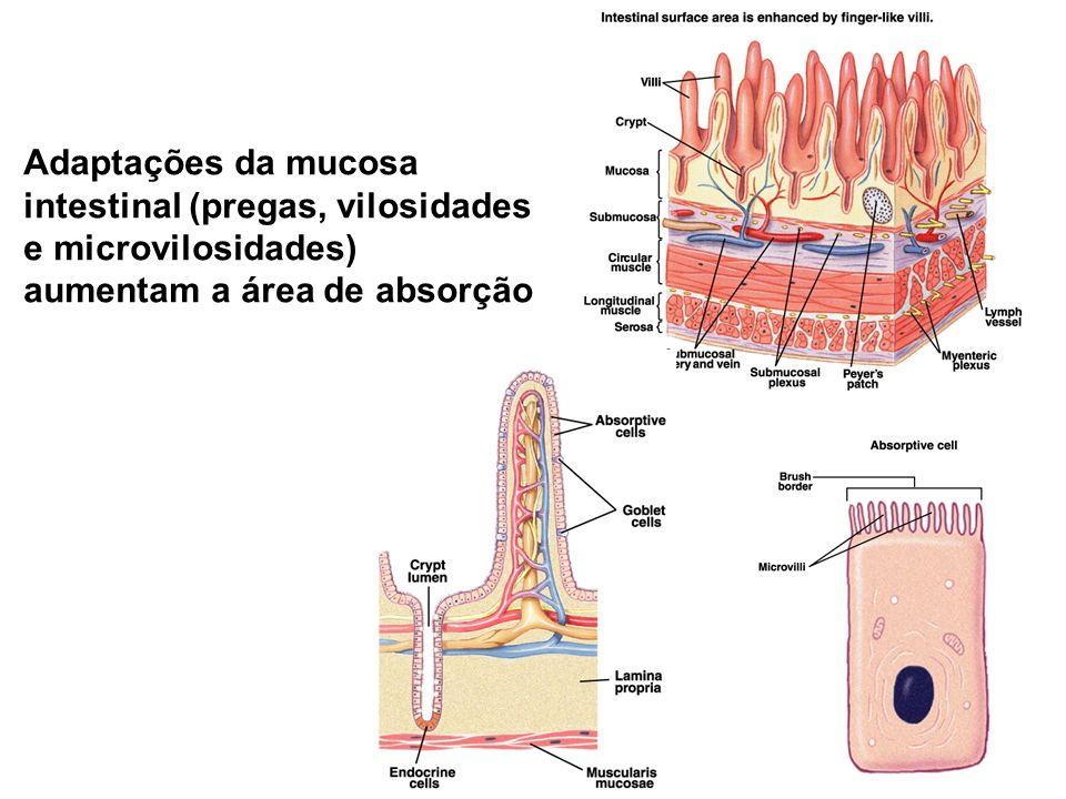 Adaptações da mucosa intestinal (pregas, vilosidades e microvilosidades) aumentam a área de absorção
