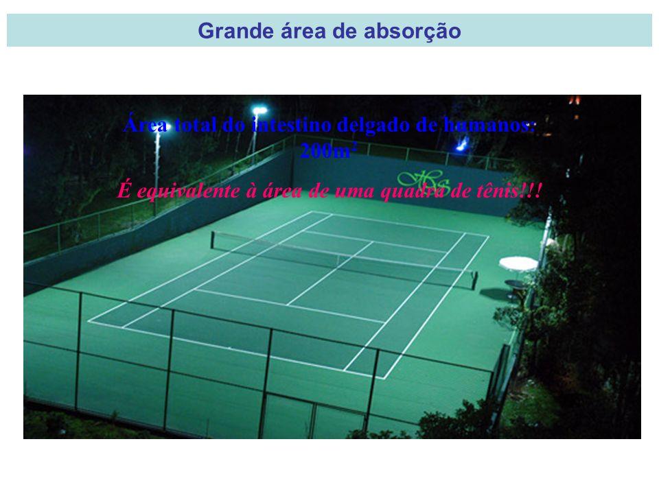 Área total do intestino delgado de humanos: 200m 2 É equivalente à área de uma quadra de tênis!!.