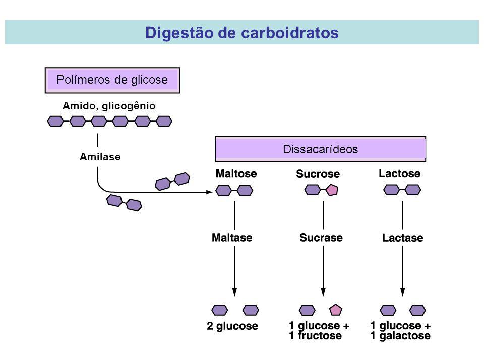 Polímeros de glicose Amido, glicogênio Amilase Dissacarídeos Digestão de carboidratos