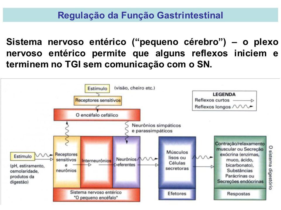 Regulação da Função Gastrintestinal Sistema nervoso entérico (pequeno cérebro) – o plexo nervoso entérico permite que alguns reflexos iniciem e terminem no TGI sem comunicação com o SN.