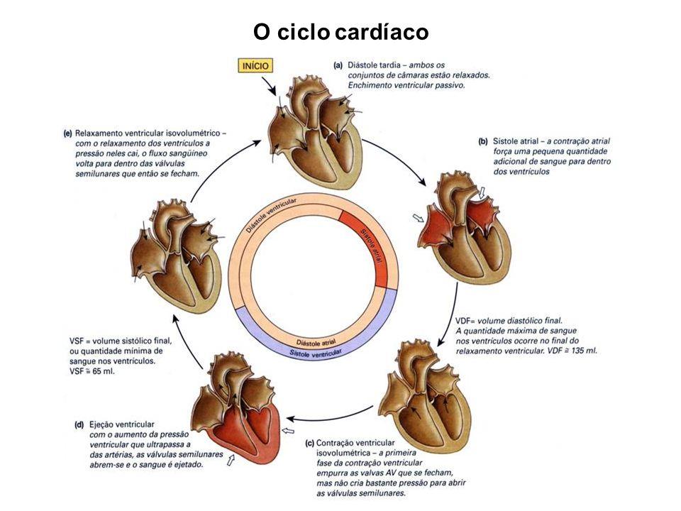 Sístole atrial Maior parte do sangue passa para os ventrículos enquanto os átrios estão relaxados.