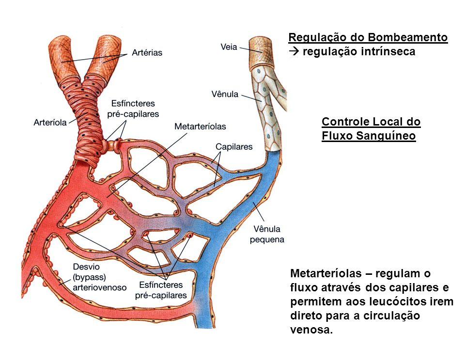 Controle Local do Fluxo Sanguíneo Regulação do Bombeamento regulação intrínseca Metarteríolas – regulam o fluxo através dos capilares e permitem aos leucócitos irem direto para a circulação venosa.