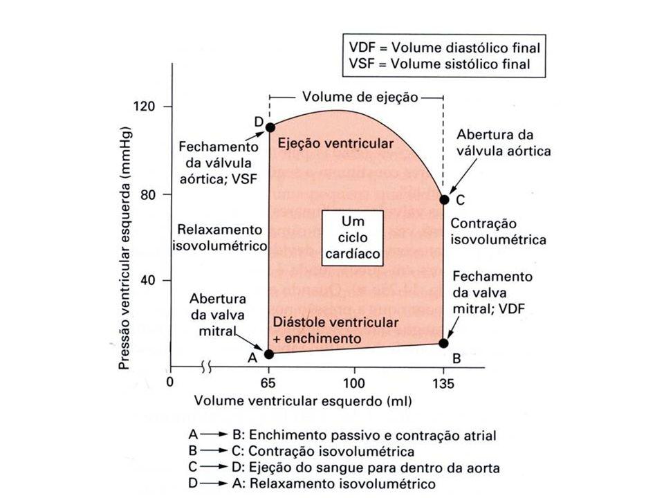 Fluxo sanguíneo total (em qualquer nível da circulação) é igual ao débito cardíaco.