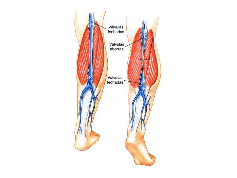 Auto-regulação miogênica – aumento da PA estimula a contração das arteríolas.