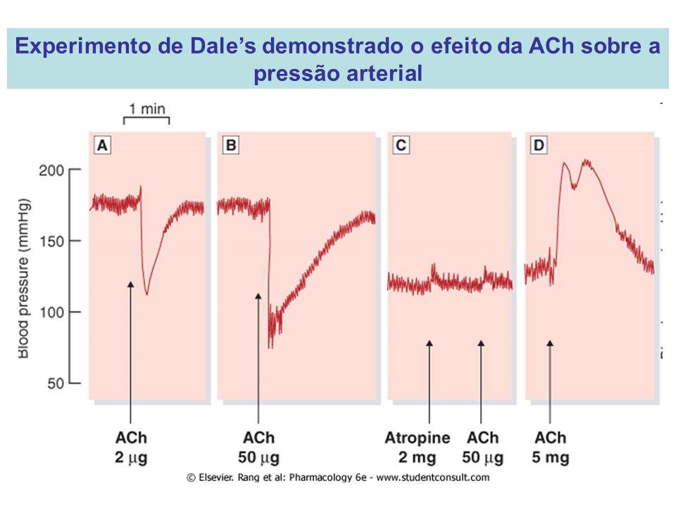 Experimento de Dales demonstrado o efeito da ACh sobre a pressão arterial