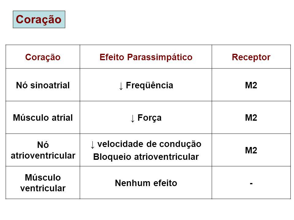 Coração Efeito ParassimpáticoReceptor Nó sinoatrial FreqüênciaM2 Músculo atrial ForçaM2 Nó atrioventricular velocidade de condução Bloqueio atrioventr