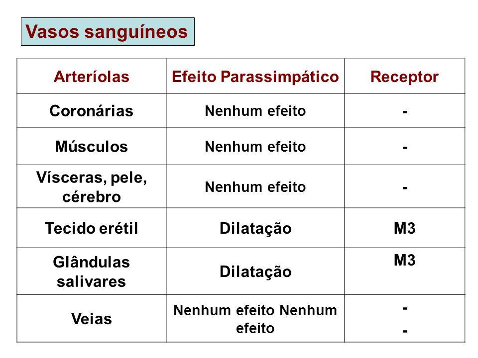 Vasos sanguíneos ArteríolasEfeito ParassimpáticoReceptor Coronárias Nenhum efeito - Músculos Nenhum efeito - Vísceras, pele, cérebro Nenhum efeito - T