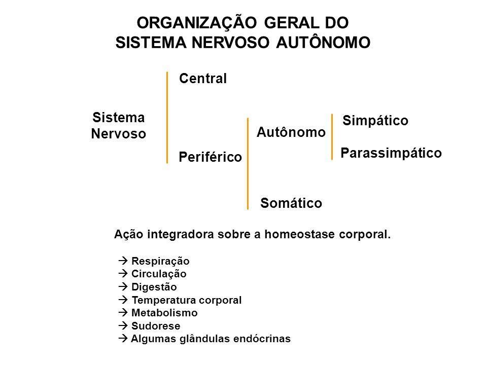ORGANIZAÇÃO GERAL DO SISTEMA NERVOSO AUTÔNOMO Sistema Nervoso Central Periférico Autônomo Somático Simpático Parassimpático Respiração Circulação Dige