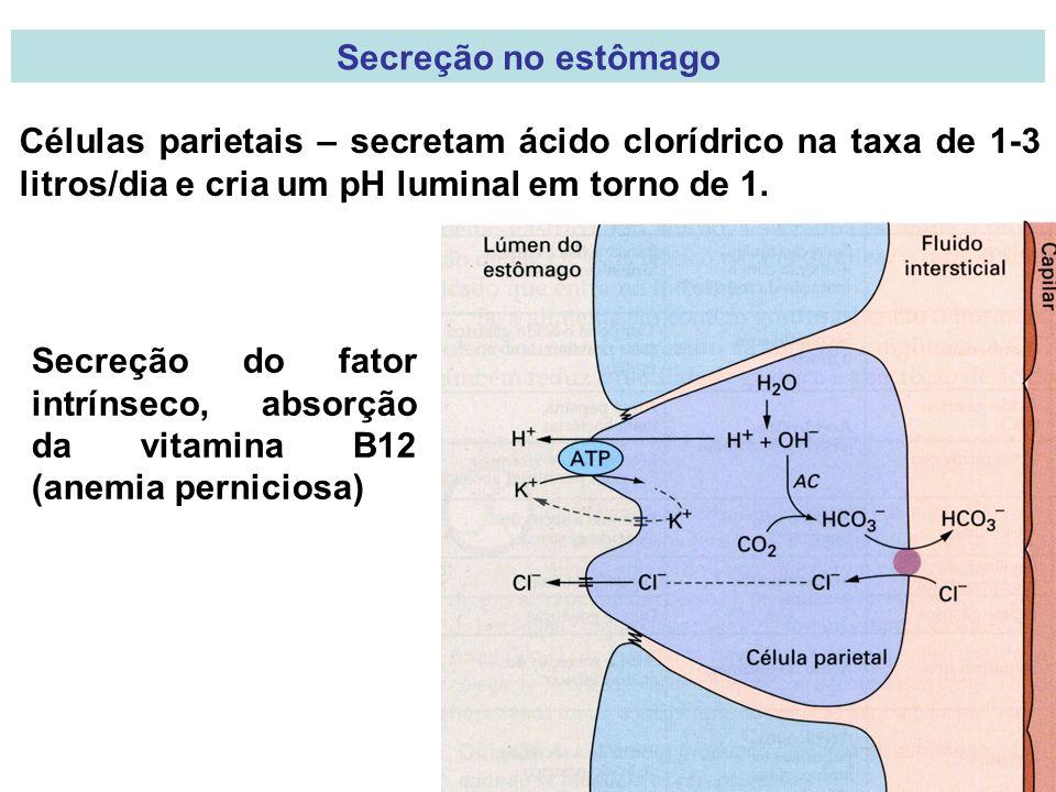 Secreção no estômago Células parietais – secretam ácido clorídrico na taxa de 1-3 litros/dia e cria um pH luminal em torno de 1. Secreção do fator int