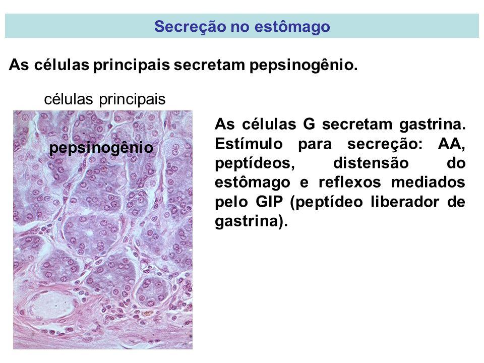 Secreção no estômago As células principais secretam pepsinogênio. células principais pepsinogênio As células G secretam gastrina. Estímulo para secreç
