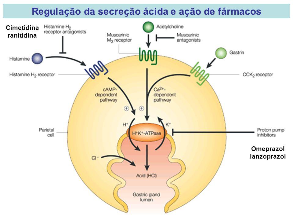 Regulação da secreção ácida e ação de fármacos Omeprazol lanzoprazol Cimetidina ranitidina