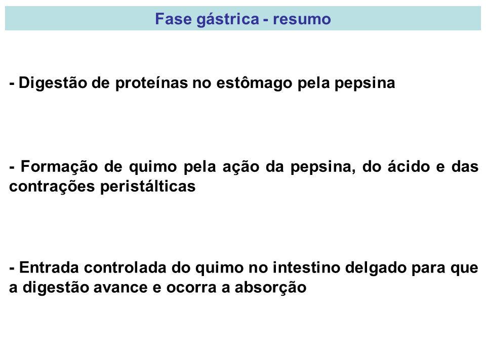 Fase gástrica - resumo - Digestão de proteínas no estômago pela pepsina - Formação de quimo pela ação da pepsina, do ácido e das contrações peristálti