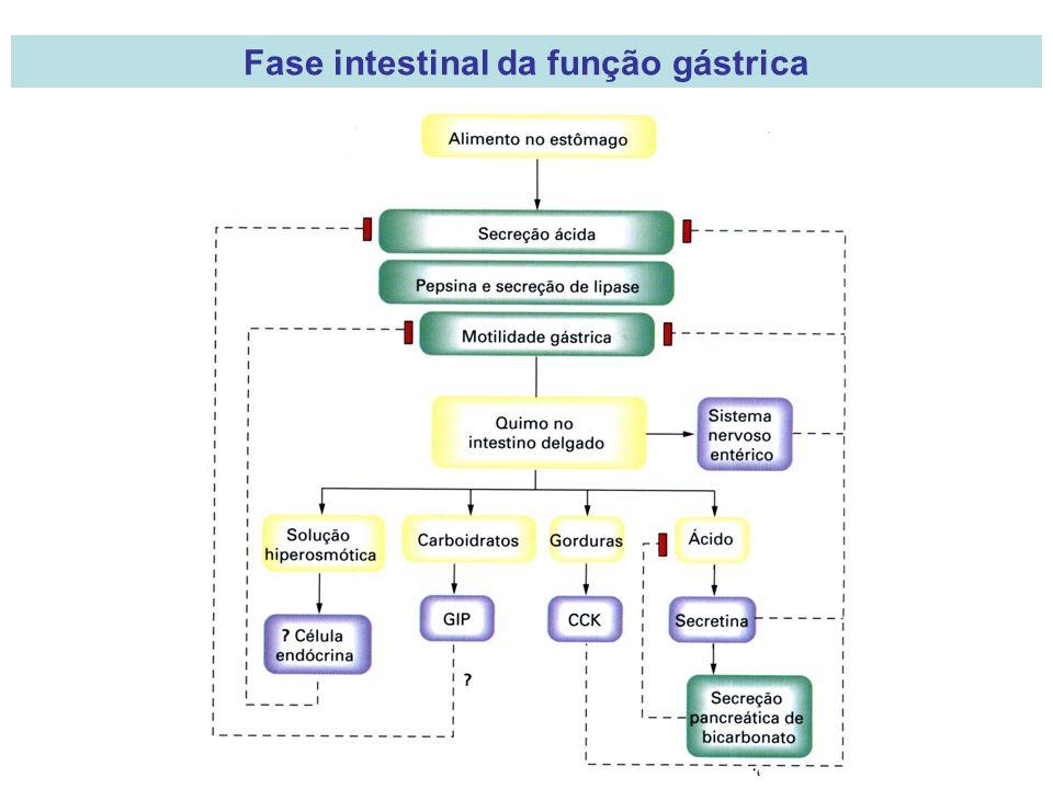 Fase intestinal da função gástrica