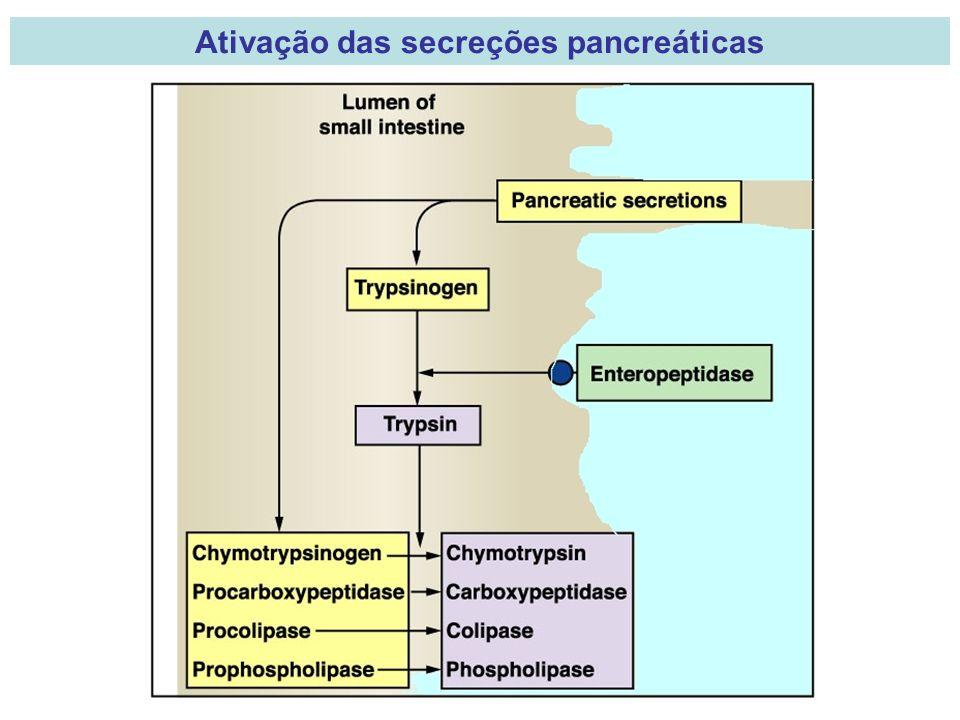 Ativação das secreções pancreáticas