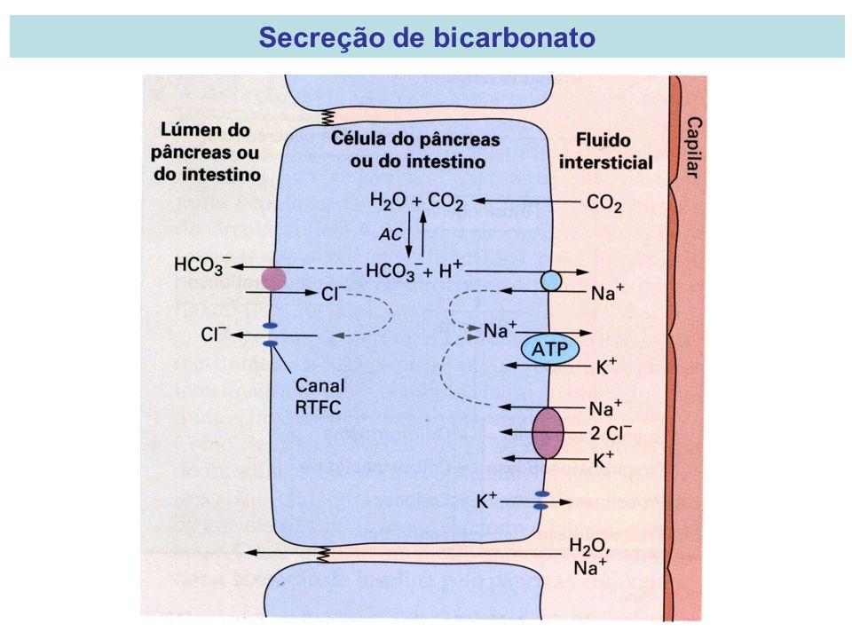 Secreção de bicarbonato