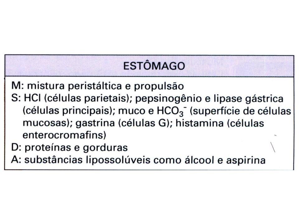 Secreção no estômago As células principais secretam pepsinogênio.