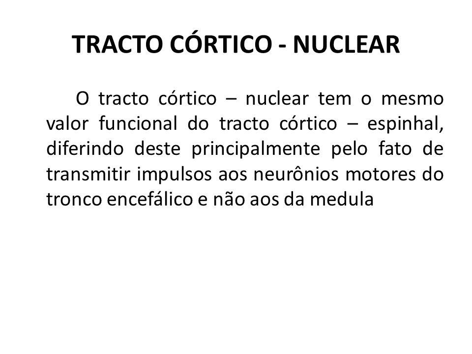 TRACTO CÓRTICO - NUCLEAR O tracto córtico – nuclear tem o mesmo valor funcional do tracto córtico – espinhal, diferindo deste principalmente pelo fato