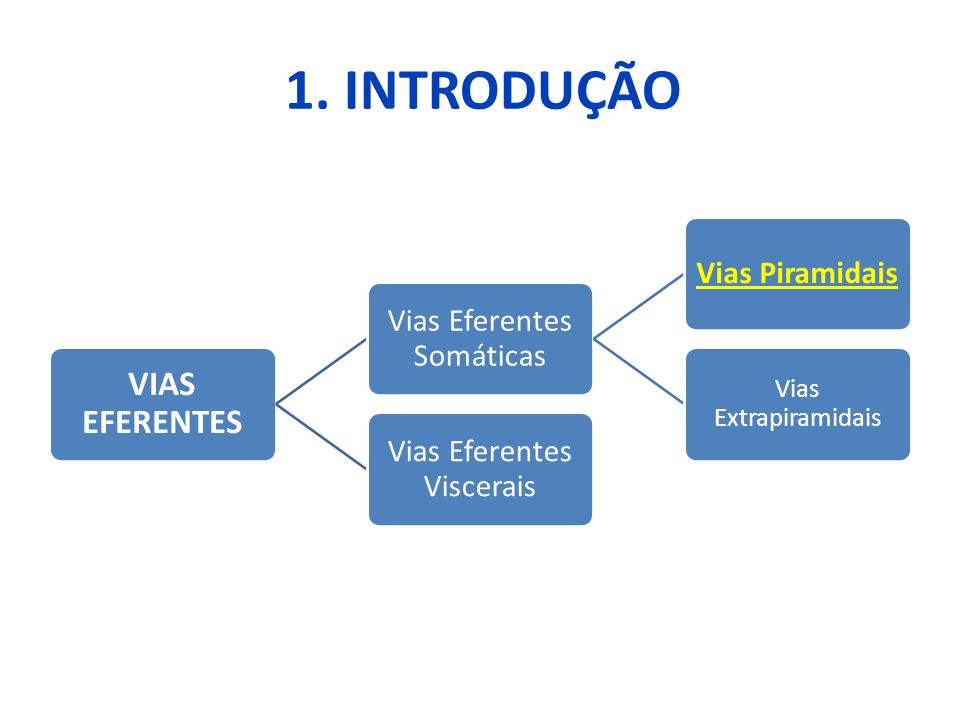 1. INTRODUÇÃO VIAS EFERENTES Vias Eferentes Somáticas Vias Piramidais Vias Extrapiramidais Vias Eferentes Viscerais