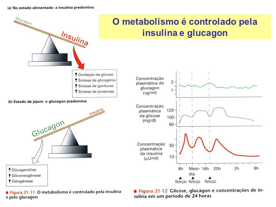 O metabolismo é controlado pela insulina e glucagon