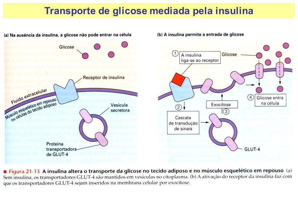Transporte de glicose mediada pela insulina