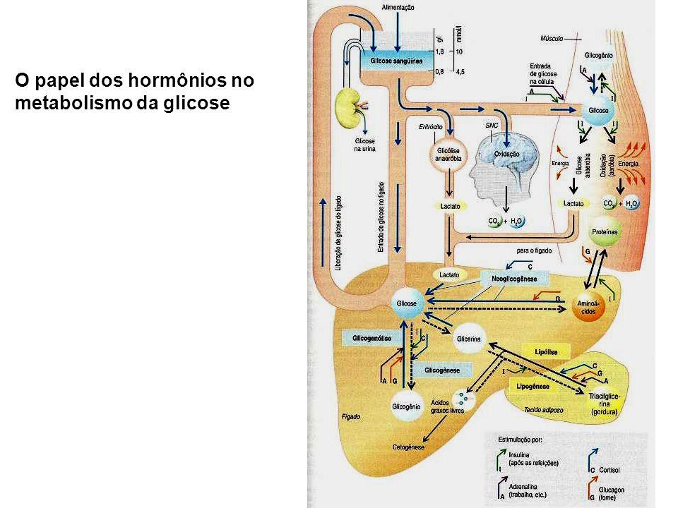 O papel dos hormônios no metabolismo da glicose
