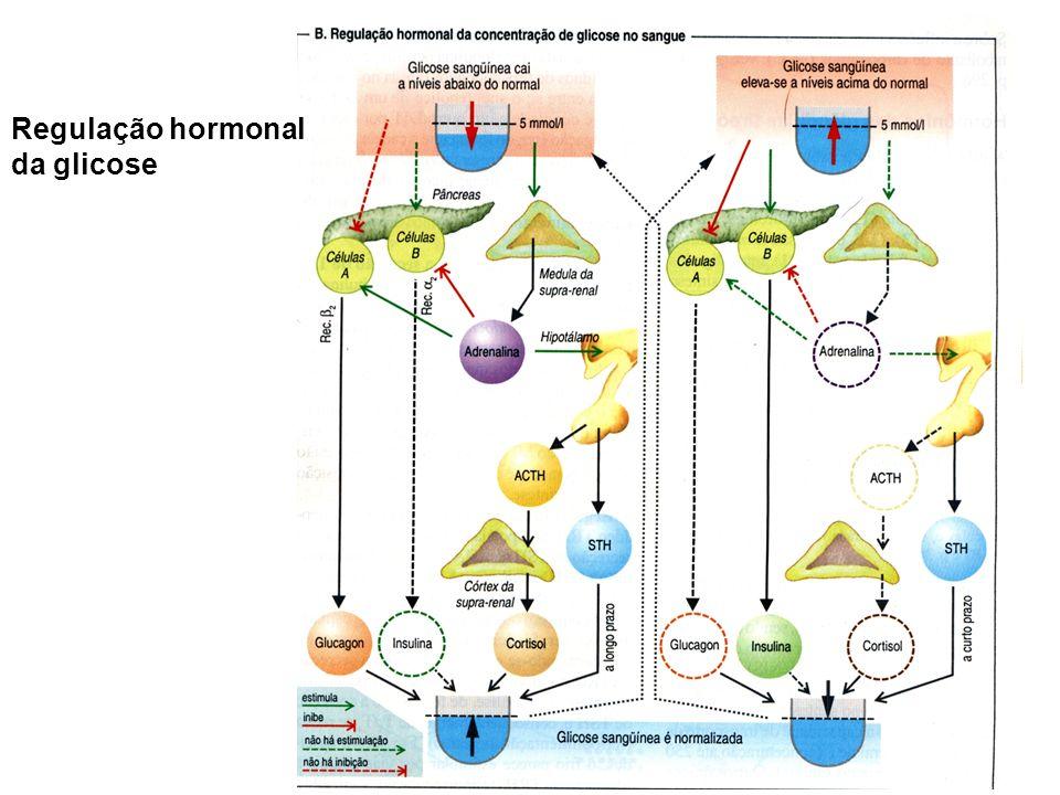 Regulação hormonal da glicose