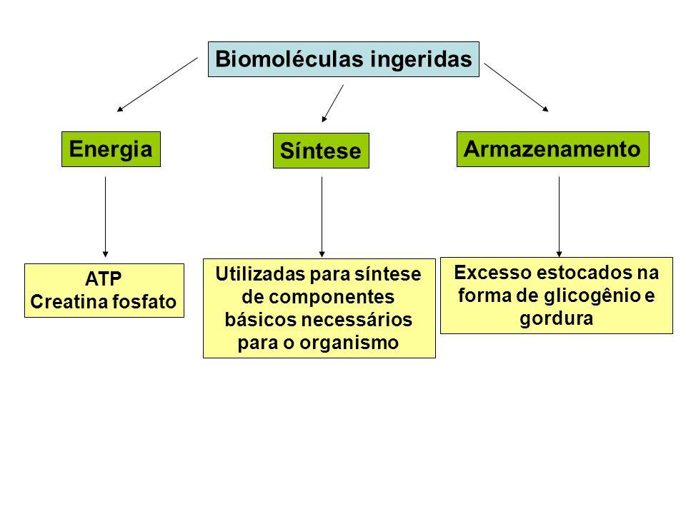 Biomoléculas ingeridas Energia Síntese Armazenamento ATP Creatina fosfato Utilizadas para síntese de componentes básicos necessários para o organismo
