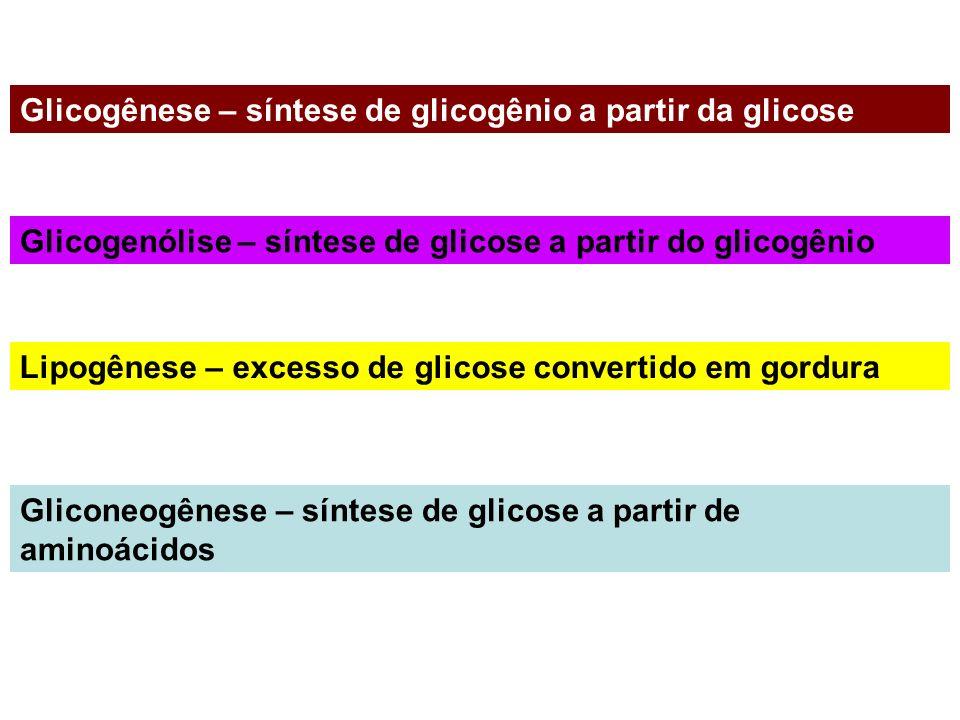 Glicogênese – síntese de glicogênio a partir da glicose Glicogenólise – síntese de glicose a partir do glicogênio Lipogênese – excesso de glicose conv
