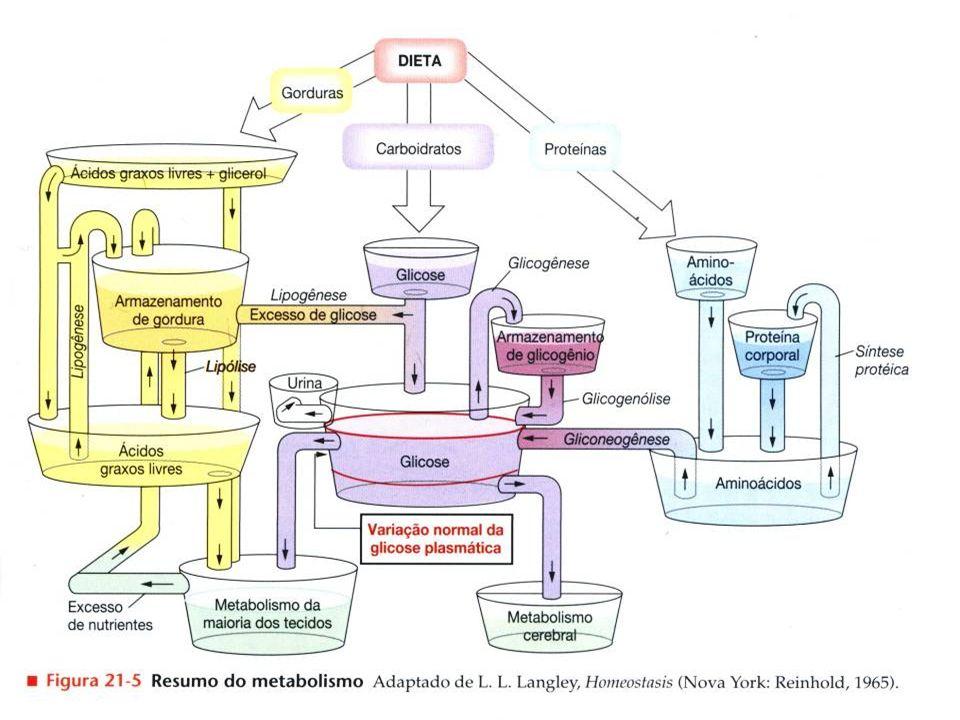 Os hormônios pancreáticos