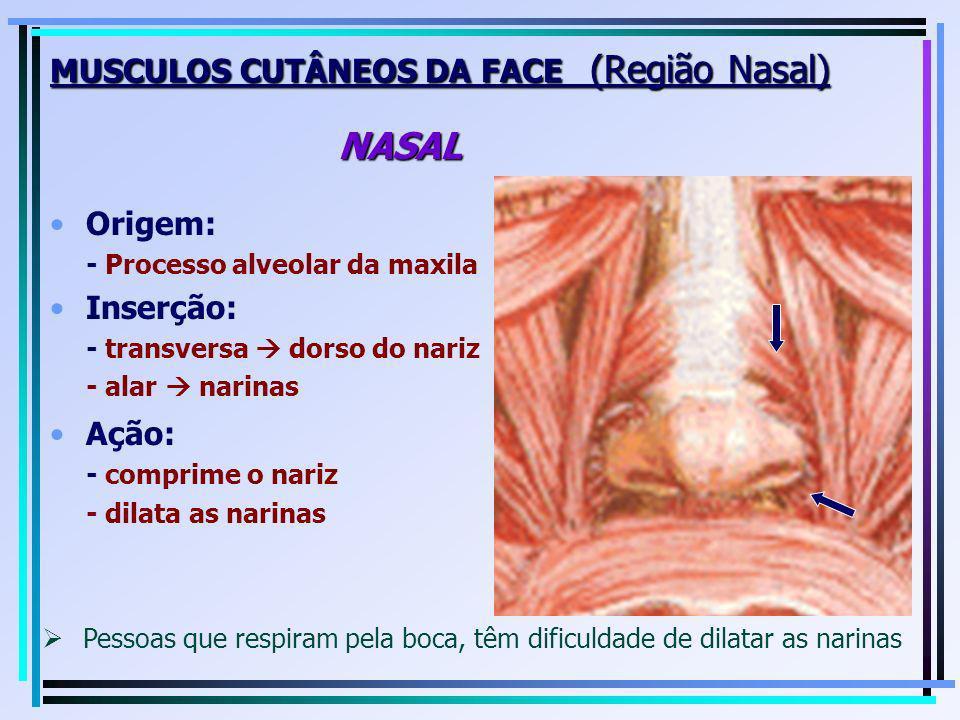 Origem: - Processo alveolar da maxila Inserção: - transversa dorso do nariz - alar narinas MUSCULOS CUTÂNEOS DA FACE (Região Nasal) NASAL Ação: - comp