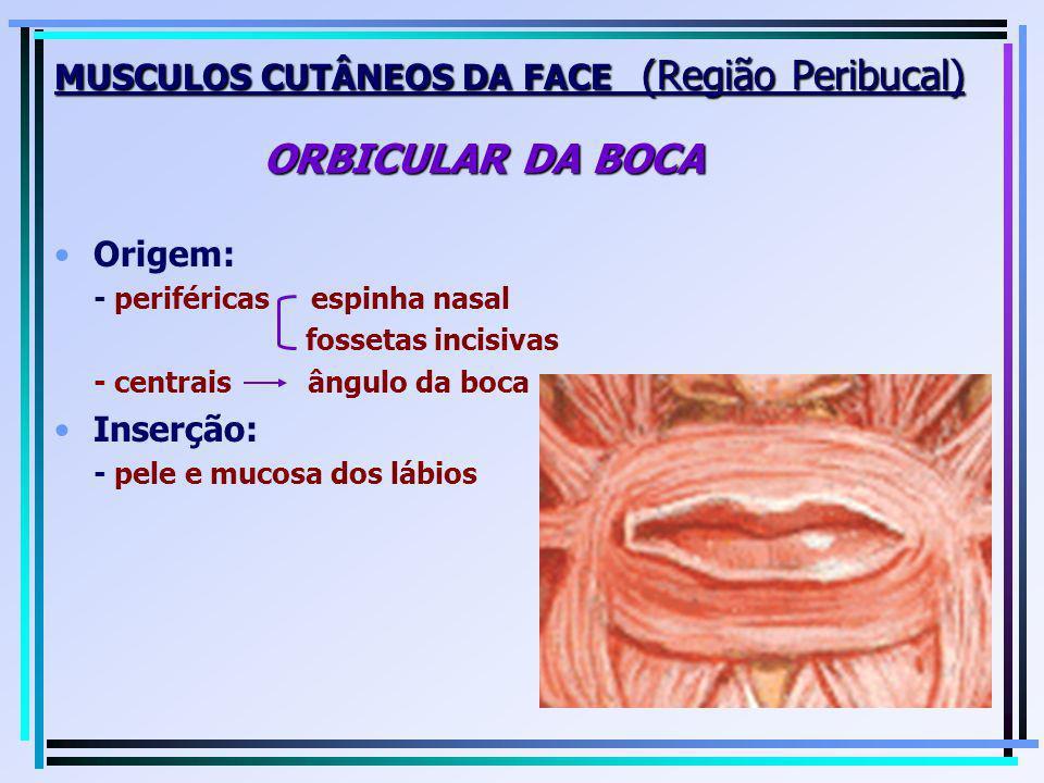 MUSCULOS CUTÂNEOS DA FACE (Região Peribucal) ORBICULAR DA BOCA Origem: - periféricas espinha nasal fossetas incisivas - centrais ângulo da boca Inserç