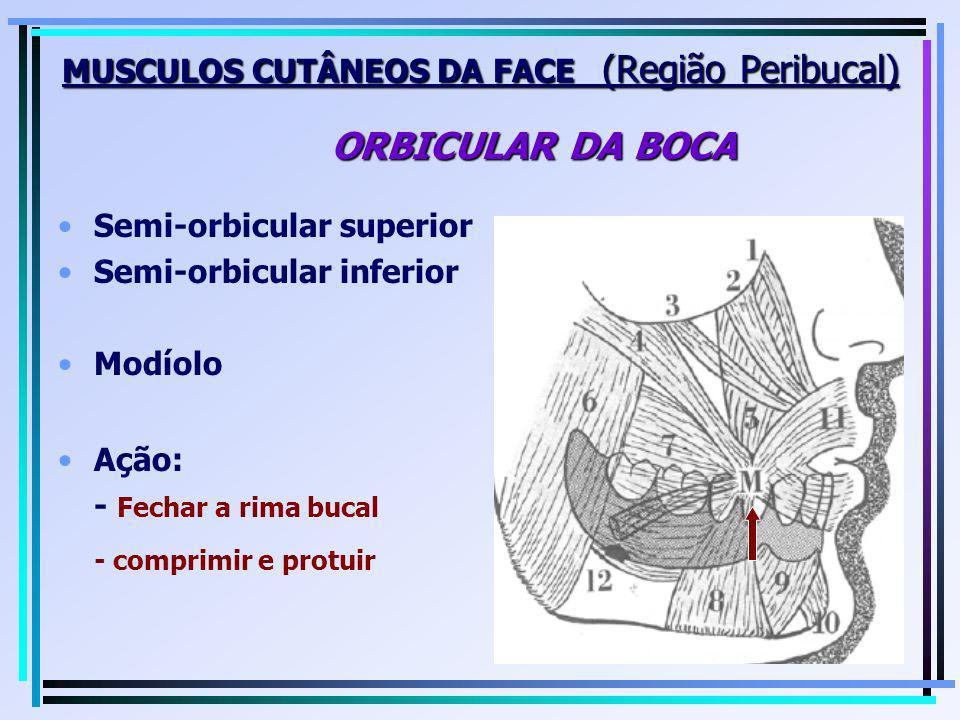 Semi-orbicular superior Semi-orbicular inferior Modíolo MUSCULOS CUTÂNEOS DA FACE (Região Peribucal) ORBICULAR DA BOCA Ação: - Fechar a rima bucal - c