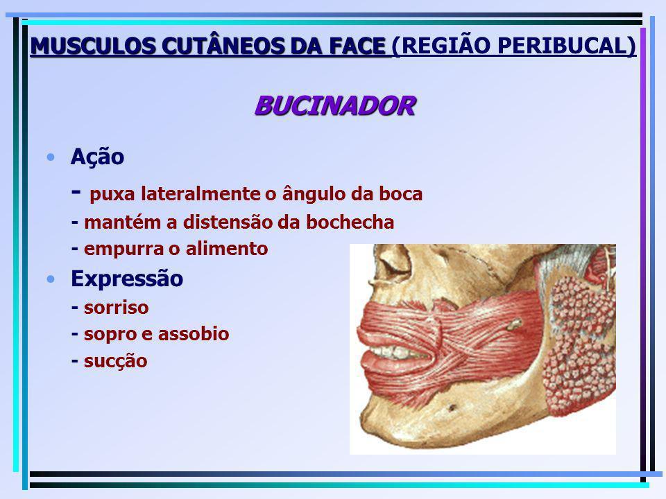 MUSCULOS CUTÂNEOS DA FACE BUCINADOR MUSCULOS CUTÂNEOS DA FACE (REGIÃO PERIBUCAL) BUCINADOR Ação - puxa lateralmente o ângulo da boca - mantém a disten