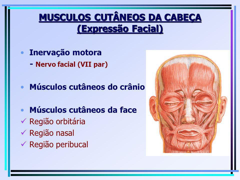 MUSCULOS CUTÂNEOS DA CABEÇA (Expressão Facial) Inervação motora - Nervo facial (VII par) Músculos cutâneos do crânio Músculos cutâneos da face Região
