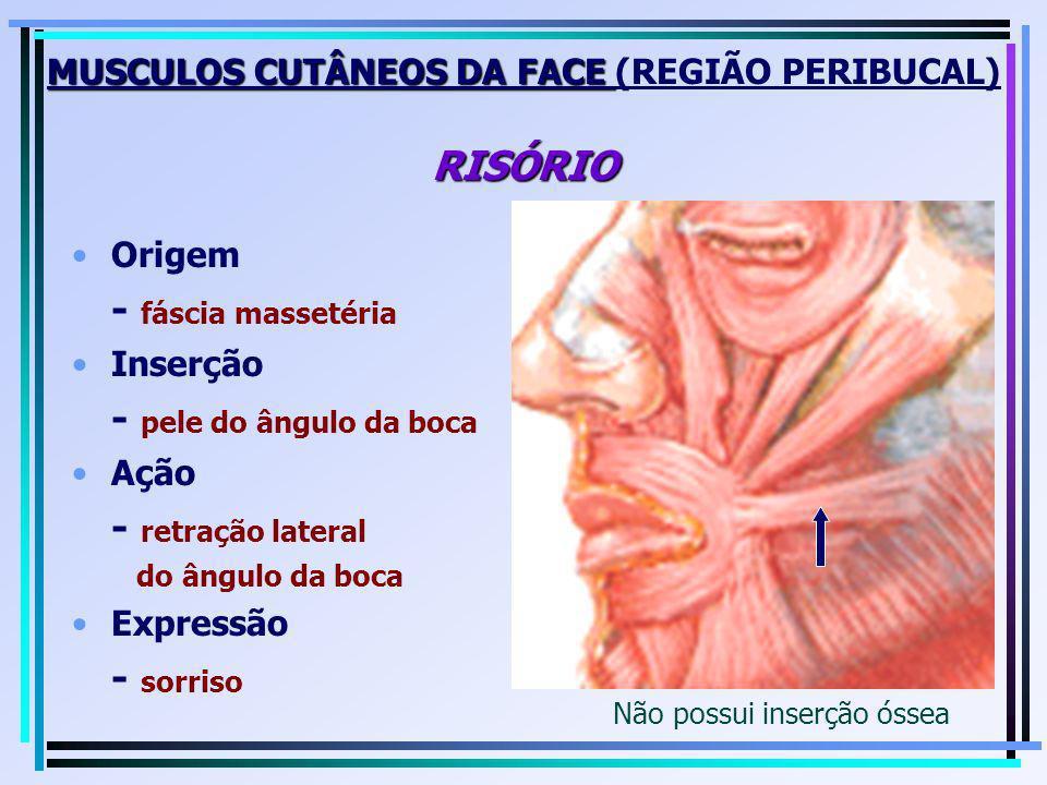 MUSCULOS CUTÂNEOS DA FACE RISÓRIO MUSCULOS CUTÂNEOS DA FACE (REGIÃO PERIBUCAL) RISÓRIO Origem - fáscia massetéria Inserção - pele do ângulo da boca Aç