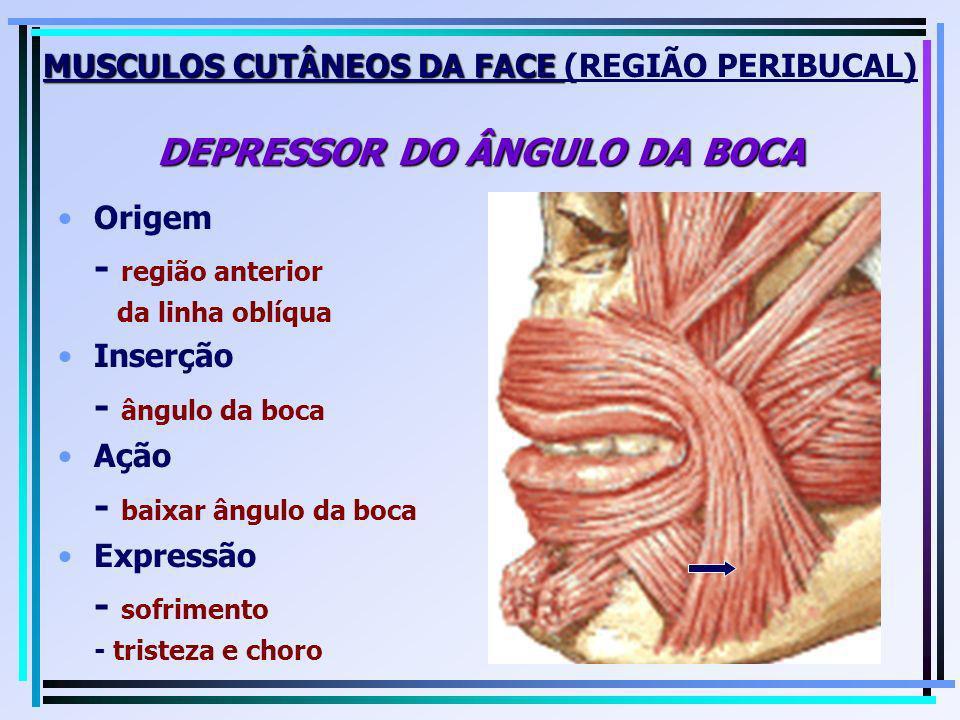 MUSCULOS CUTÂNEOS DA FACE DEPRESSOR DO ÂNGULO DA BOCA MUSCULOS CUTÂNEOS DA FACE (REGIÃO PERIBUCAL) DEPRESSOR DO ÂNGULO DA BOCA Origem - região anterio