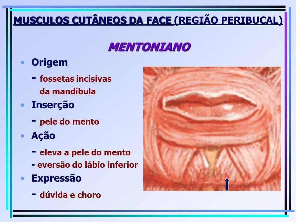 MUSCULOS CUTÂNEOS DA FACE MENTONIANO MUSCULOS CUTÂNEOS DA FACE (REGIÃO PERIBUCAL) MENTONIANO Origem - fossetas incisivas da mandíbula Inserção - pele